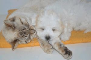 rinite-alergia-caes-gatos