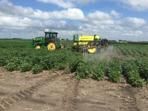 spraying-aphids