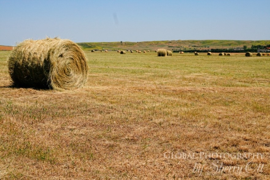 south dakota hay