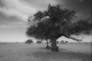 A few lone trees were a pleasant surprise