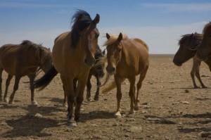 Mongolian Safari