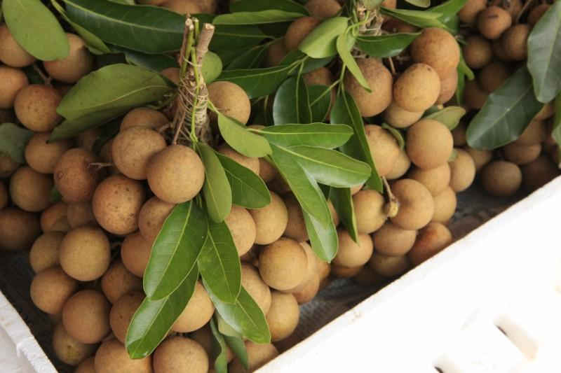 longa fruit vietnam market