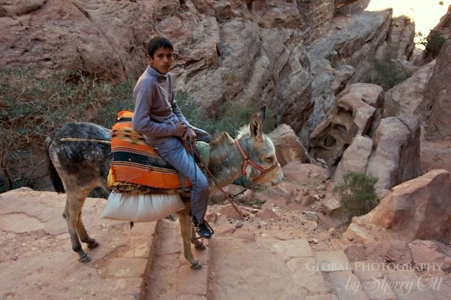merchants petra donkey
