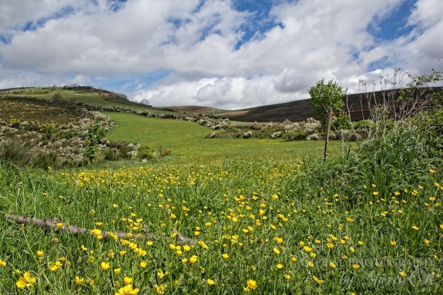 spring meadows camino thru hike