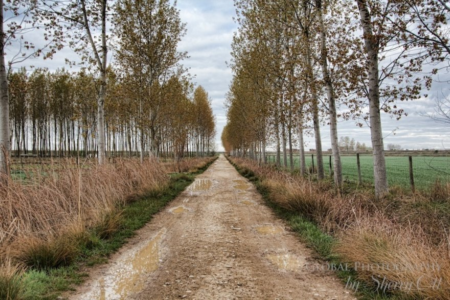 tree lined path camino