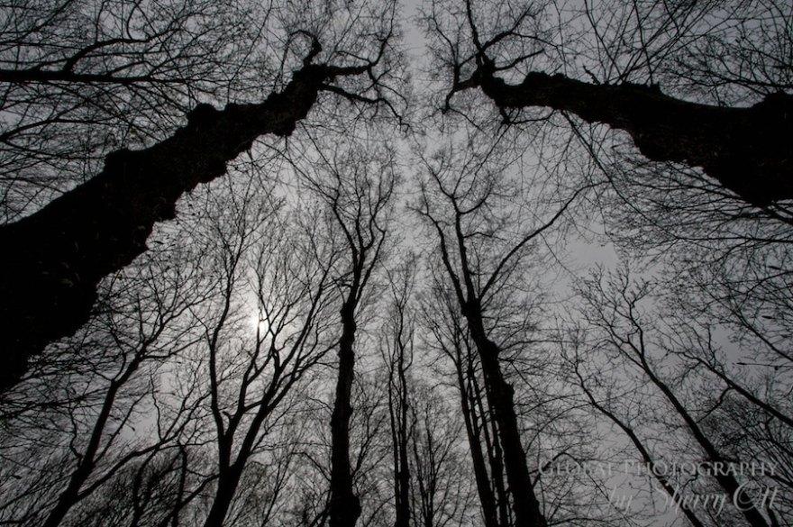 Trees reaching to the sky
