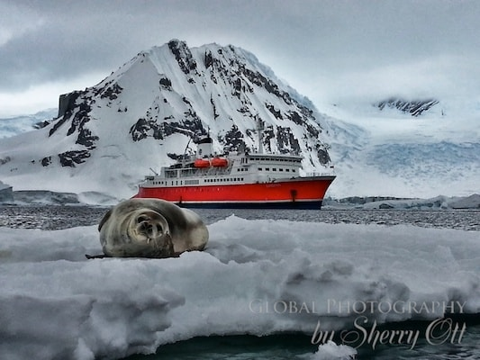 a seal on the ice, with an expedition cruise to Antarctica