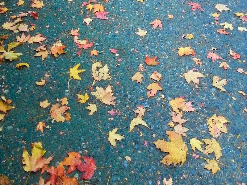 Fall colors new york