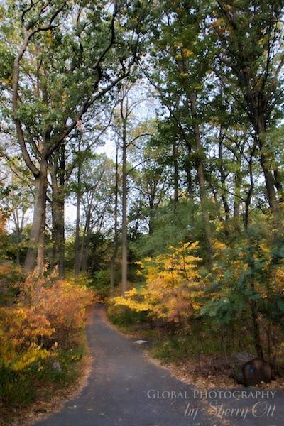 Inwood park pathway nyc