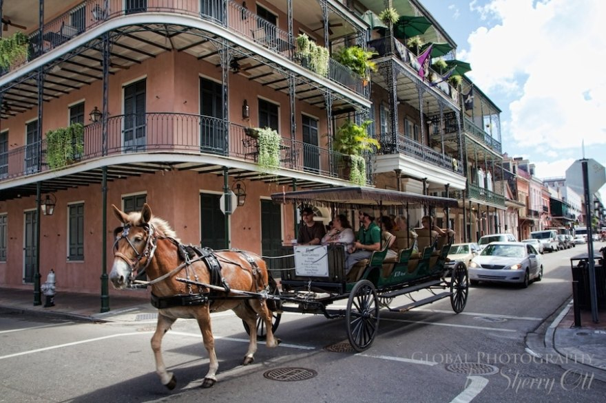 French Quarter horse