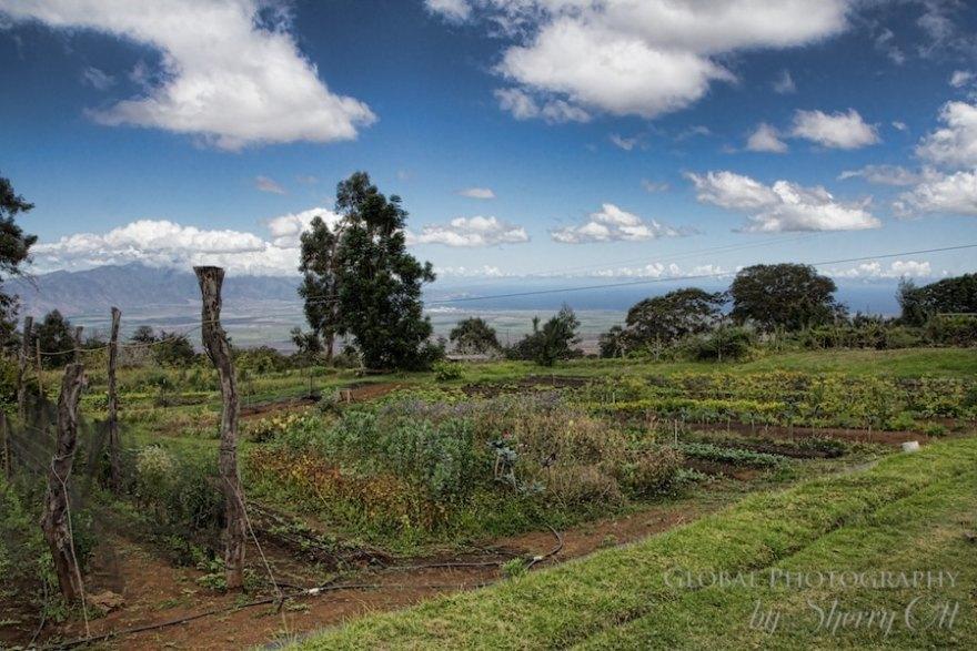 Oo Organic Farm Maui