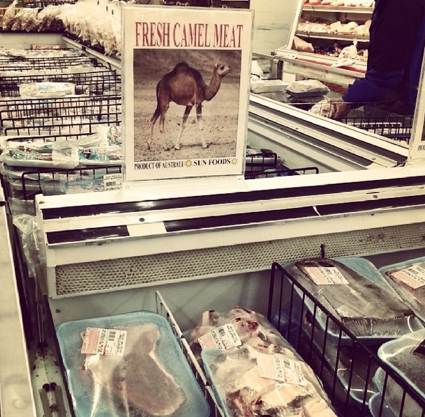 Camel Meat St. Paul