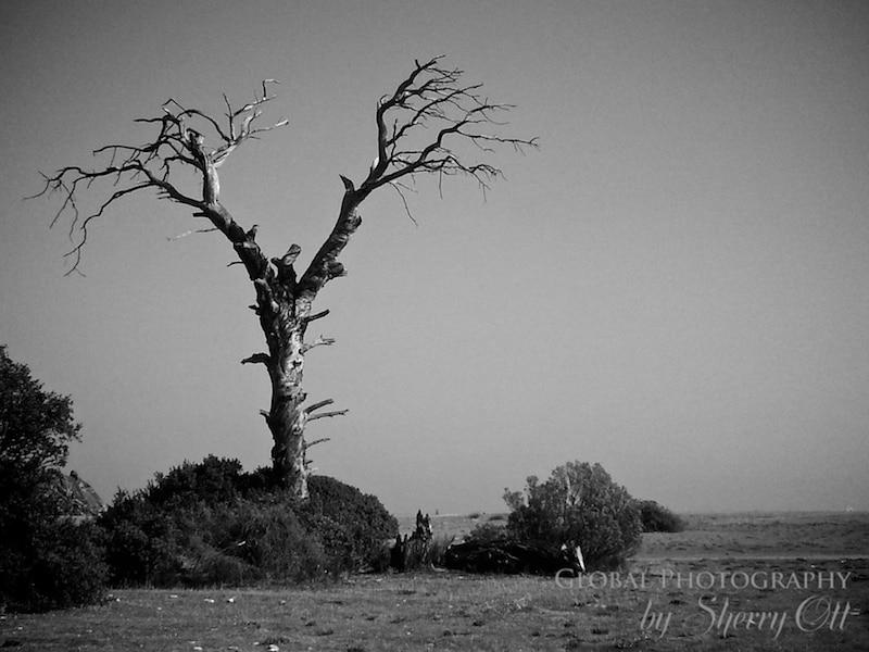 Tree Cirali