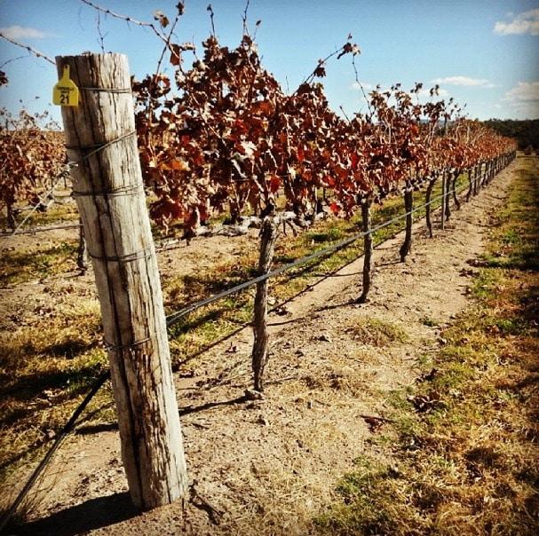 granite belt winery