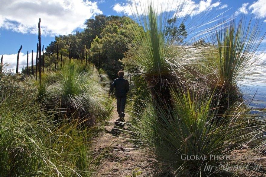 Mt. Mitchell Australia
