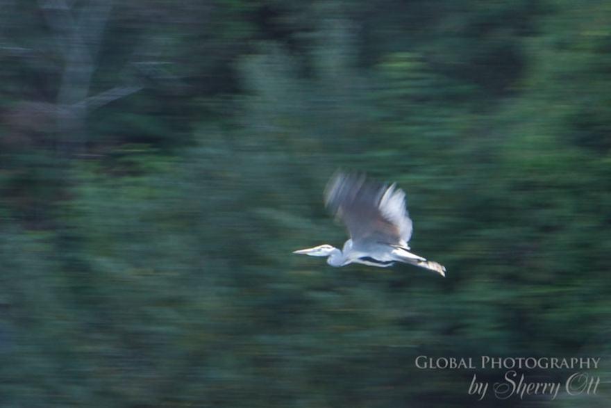 ireland kayking bird watching