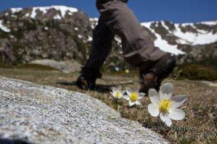 Spring flowers around Lake Malniu