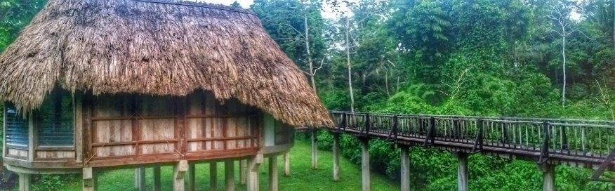 Belize Jungle 1500