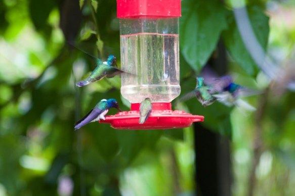Humming birds!