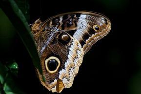 Butterflies in the jungle