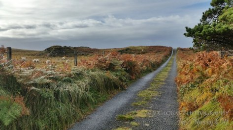 Fall Colors Ireland 3