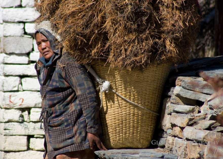 nepal harvest season