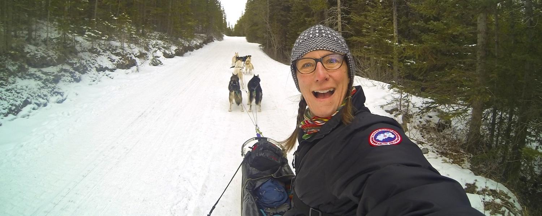 Dog sledding banff