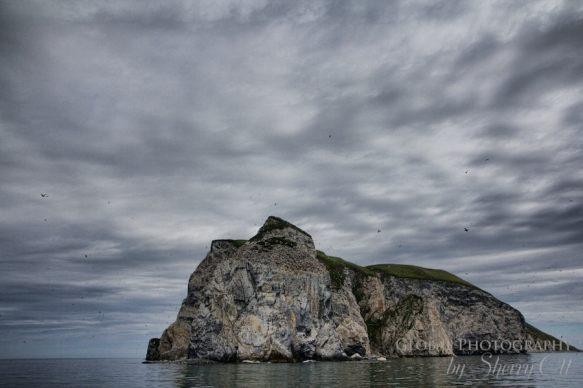Bird Watching Nuneangan Island