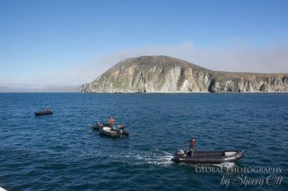 Birding travel Preobrazheniya Bay Russia