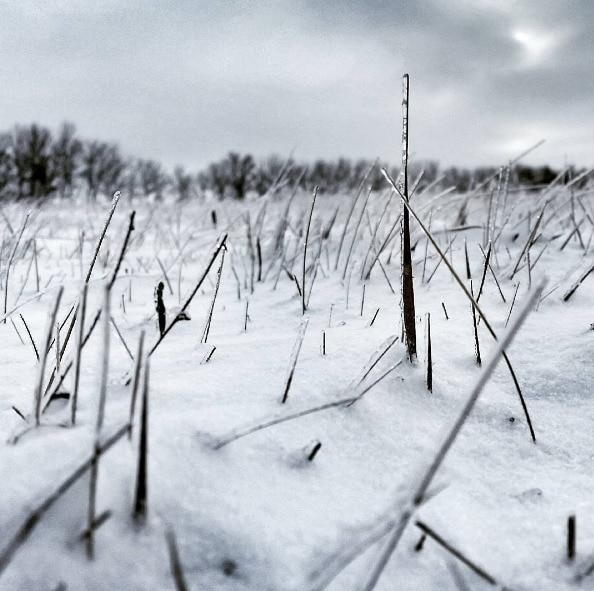 snow prairie