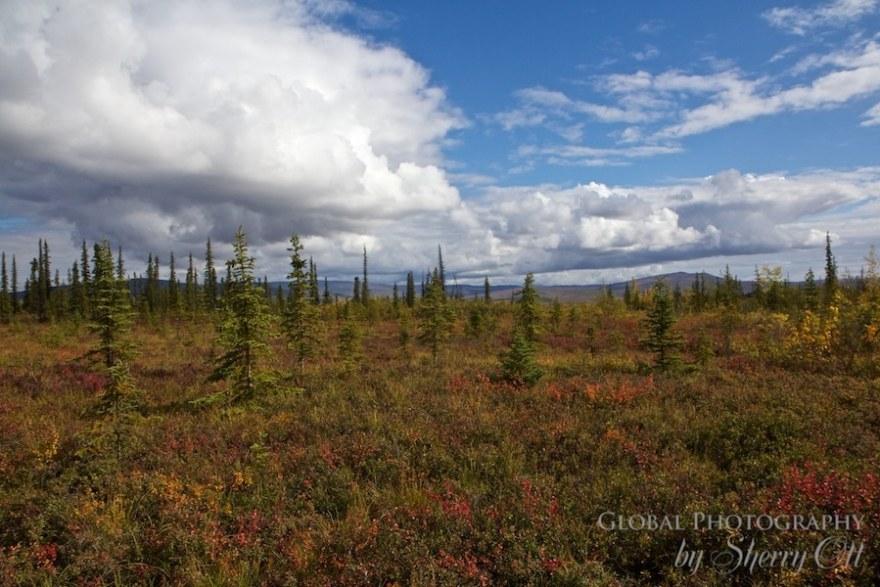 Arctic landscape Alaska
