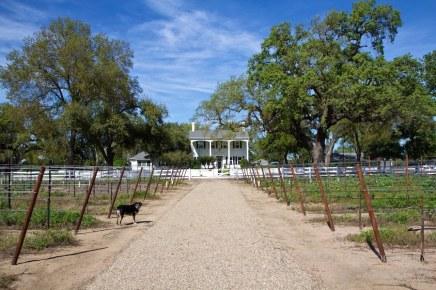 Oak Farm Vineyards Lodi California