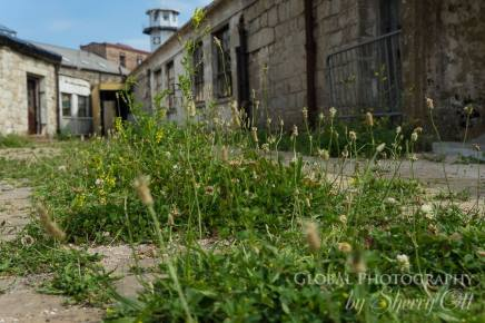 Overgrown and abandoned Eastern State Penitentiary