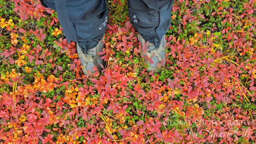 fall foliage tundra