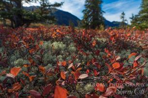 fall photography tundra