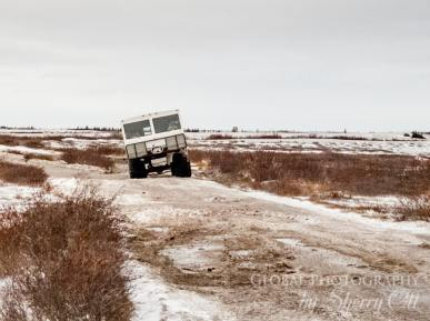 Tundra buggy polar safari