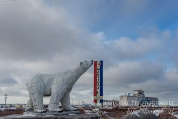 polar bear town churchill