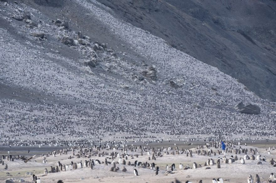 Franklin Island Ross Sea Adelie penguins
