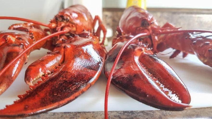 eat lobster new brunswick