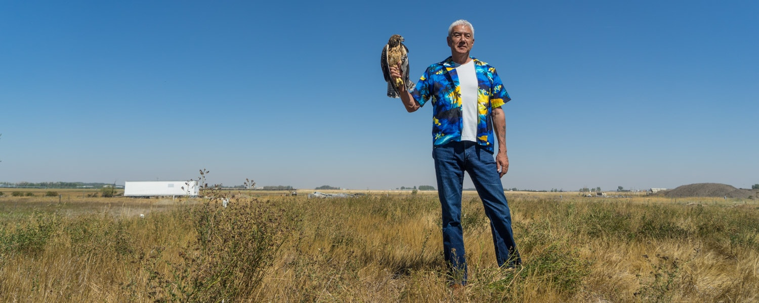 Alberta birds of prey hawk release tom jackson