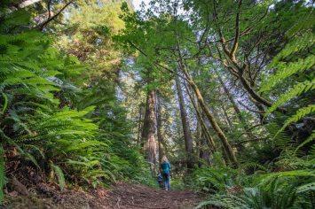 California Redwoods Adventure
