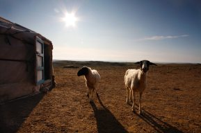 Mongolia Ger to Ger Extreme Travel