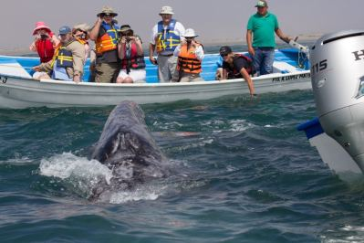 whale watching Baja Mexico