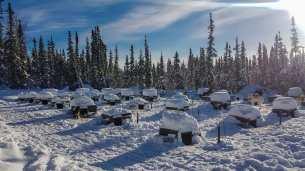 dog sledding alaska-59