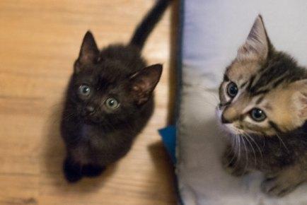 Denver foster kittens