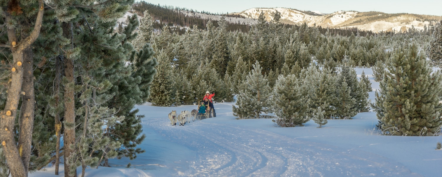 colorado dog sledding snow mountain ranch
