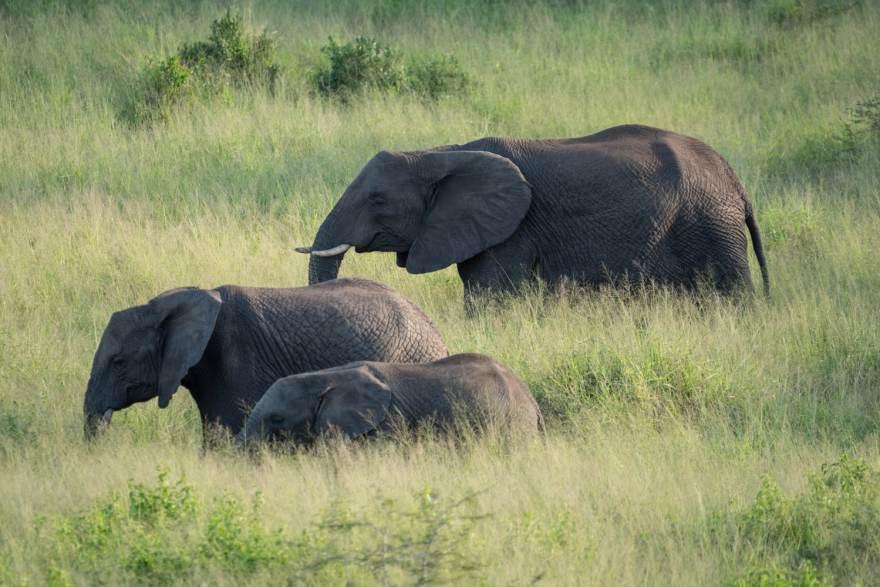 safari elephant photography