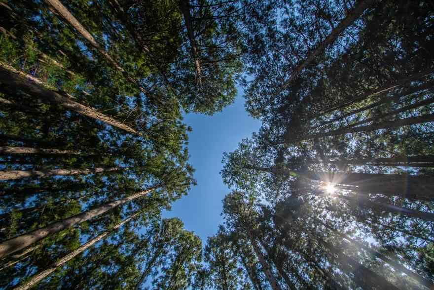 kumano kodo japan trees