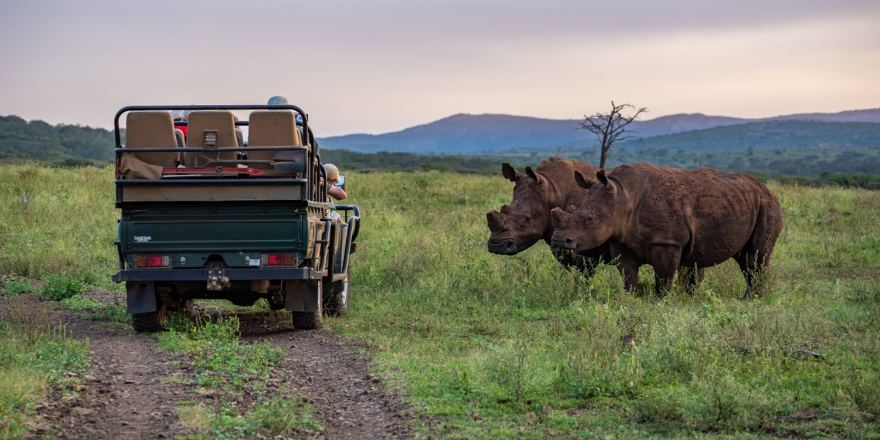 rhinos conservation south africa