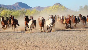 horse dude ranch arizona